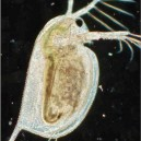 Analys av djurplankton, kvalitativ